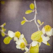 gy_flowersprint