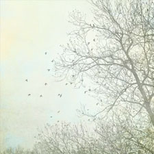 gy_treesprint