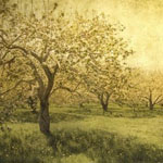 apples_0006_irenesuchocki