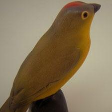 gy_bird