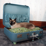 2-1_suitcasebed