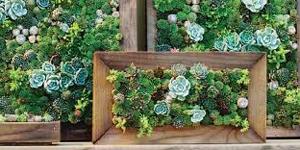 SucculentsGalore